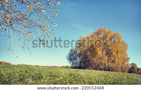 Beautiful autumn landscape in a sunny day with birch trees (focus on a branch) - stock photo