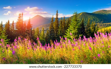 Beautiful autumn landscape in the mountains with pink flowers. - stock photo