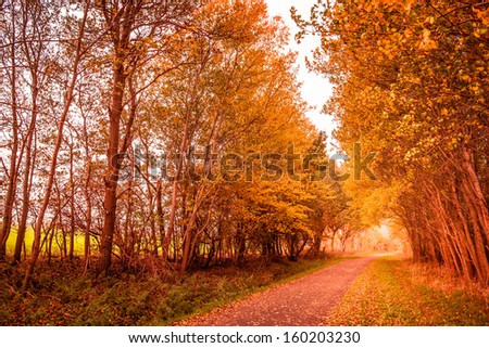 Beautiful autumn landscape in warm colors