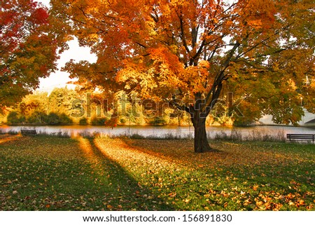 Beautiful Autumn landscape of sunset colored trees and warm colored leaves that covers the ground - stock photo