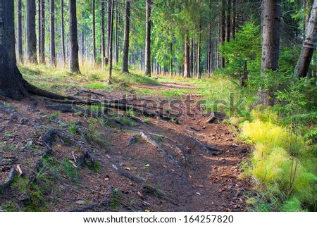 beautiful autumn landscape with a coniferous forest and  footpath - stock photo