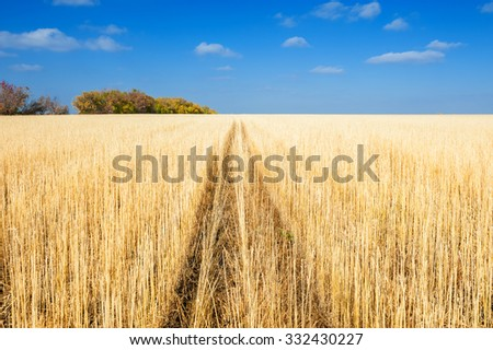 Beautiful autumn landscape with yellow field and blue sky.