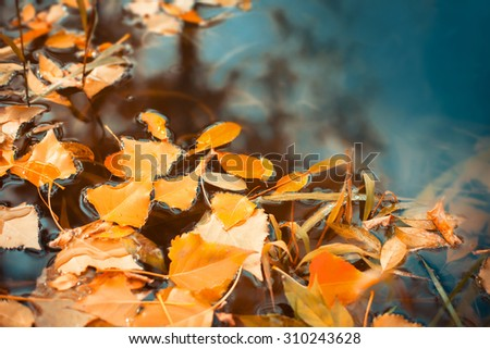 Beautiful autumn leaves fell into the water in the autumn - stock photo