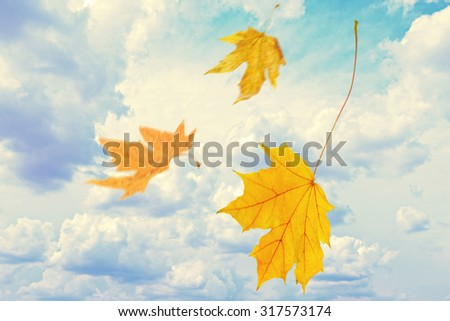 Beautiful autumn leaves flying on a wind - stock photo