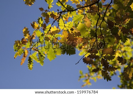 beautiful autumn leaves from Bulgaria