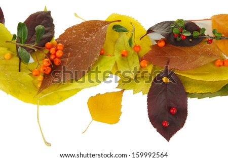 Beautiful autumn leaves with berries isolated on white - stock photo
