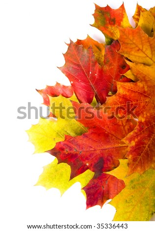 Beautiful autumn maple leaves border surface close up over white