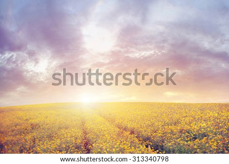 Beautiful autumn meadow at sunset - stock photo