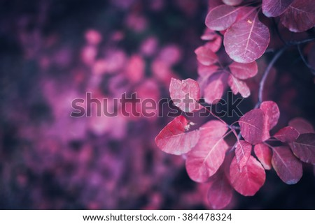 Beautiful autumn nature background with colorful leaves on branch in soft focus. Abstract. Vintage toning - stock photo