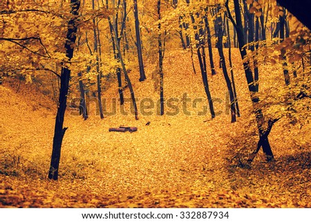 Beautiful autumn park covered with green leaves hills. path, trees