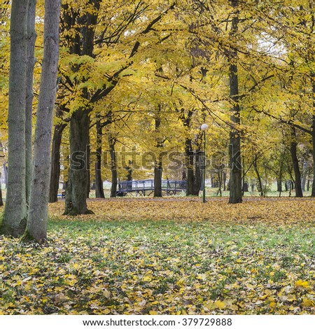 Beautiful autumn park with yellow leaves