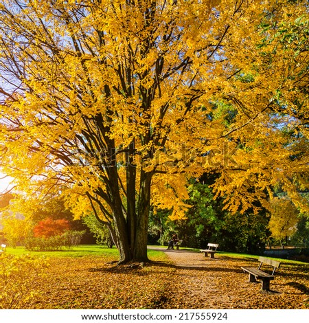 Beautiful autumn scene in park in golden morning light at sunrise, Salzburg, Austria - stock photo