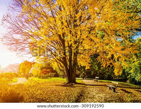 Beautiful autumn scene in park in golden morning light at sunrise, Salzburg, Austria - stock photo