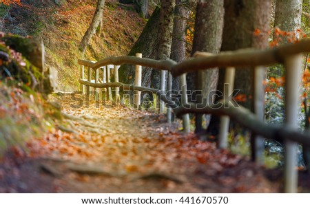 Beautiful autumn scene invites to walkon a misty footpath in the forest. Nature wether background. - stock photo
