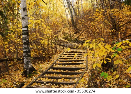 Beautiful autumn scene of a winding hiking trail covered by golden leaves in forest, north Saskatchewan river valley, Edmonton, Alberta, Canada - stock photo