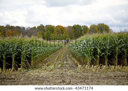 Beautiful Autumn scene of workers harvesting corn - stock photo