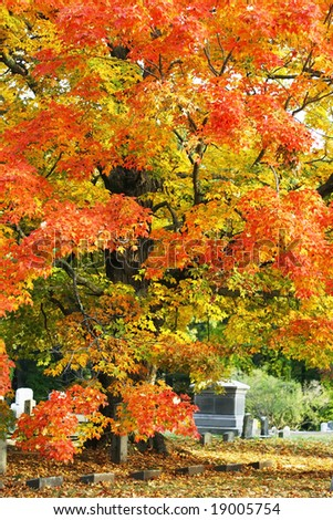 beautiful autumn tree in cemetery