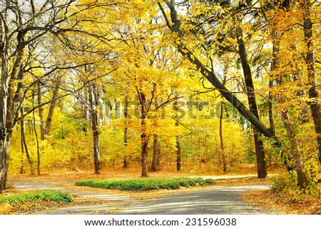 Beautiful autumn trees in park