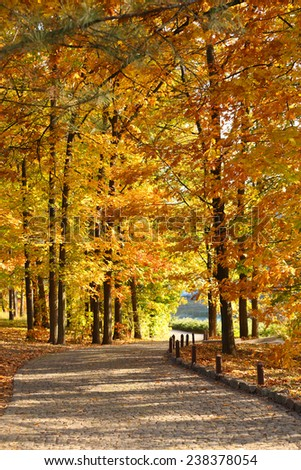 Beautiful autumn trees in park - stock photo