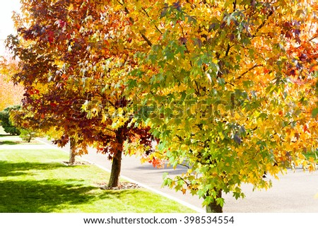 Beautiful autumn trees in the park on a sunny day