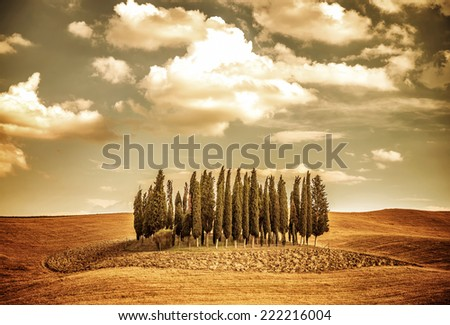 Beautiful autumn vintage landscape, several lonely trees in golden dry field, beauty of autumnal nature, Tuscany countryside panorama, Italy - stock photo