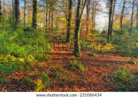 Beautiful Autumn woods near Bodmin in Cornwall