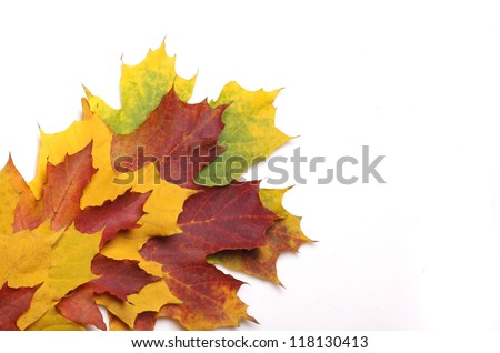 beautiful autumn yellow leaves background