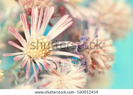 beautiful autumnal gently pink flower - stock photo