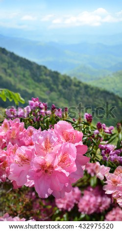 Beautiful azaleas blooming in mountains. Green hills,meadows and sky in the background. Summer mountain landscape. Blue Ridge Mountains, North Carolina, USA. - stock photo