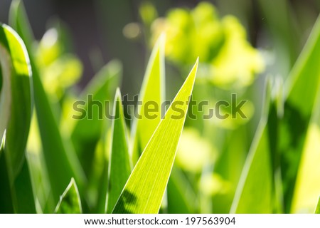 beautiful background from leaves of grass - stock photo