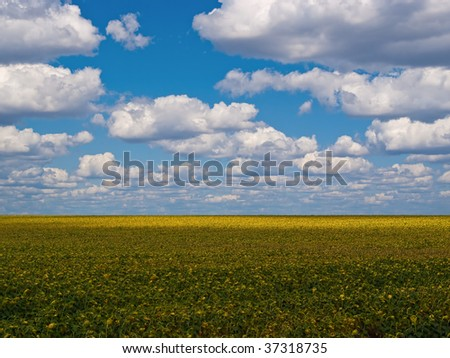 Beautiful background from the dark blue sky of white clouds and a field - stock photo