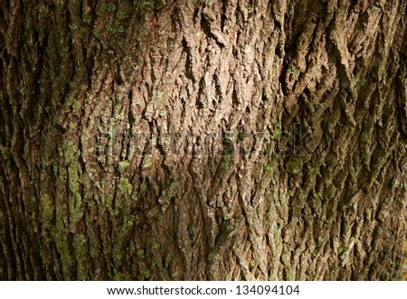 beautiful background of a large tree bark and moss - stock photo