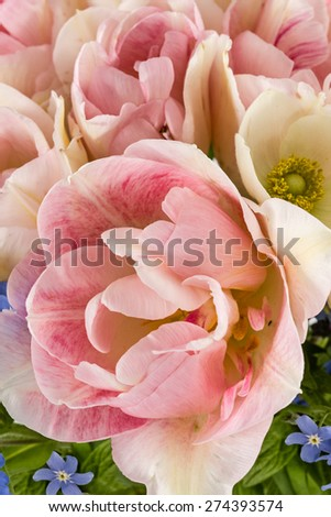 Beautiful background of flowers, close-up - stock photo
