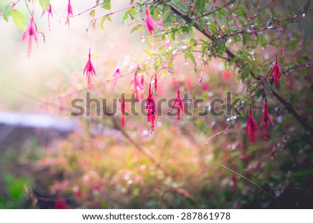 Beautiful background of hanging wild flowers - stock photo