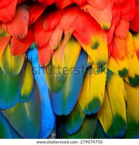 Beautiful background of Scarlet Macaw feathers pattern - stock photo