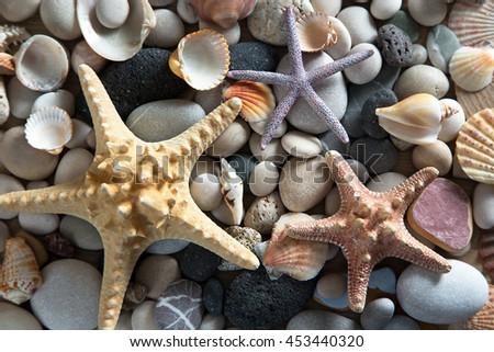 Beautiful background of sea shells and starfish  - stock photo
