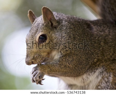 Beautiful background with a cute funny squirrel eating something