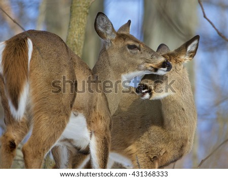 Beautiful background with a pair of the cute wild deers in the forest