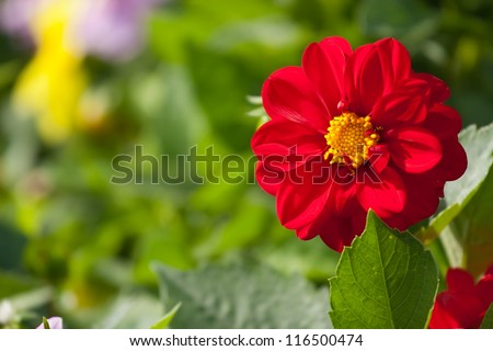 Beautiful background with a red flower and green plants in the park, Moscow, Russia - stock photo