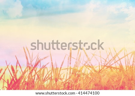 Beautiful background with green grass close up