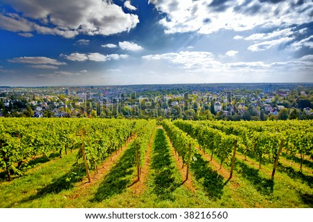 Beautiful background with vineyard an cityscape under majestic sky