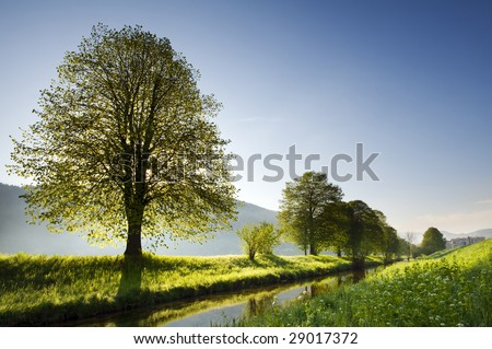 Beautiful backlight spring nature scene on clear day - stock photo