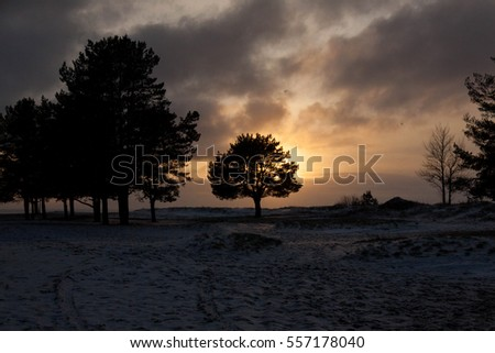 Beautiful backlit tree on the seashore