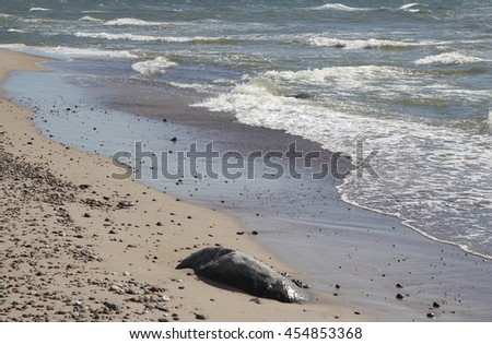 Beautiful Baltic sea shore with big cliff  - stock photo