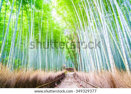 Beautiful Bamboo forest in Arashiyama at Kyoto - Bright Processing style pictures