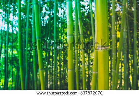Beautiful bamboo green fresh forest branches. Asian nature, Japanese jungle, bamboo trees stems on the blue sky background. Close up, macro view.