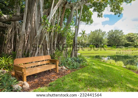 Beautiful Banyan tree in botanical garden