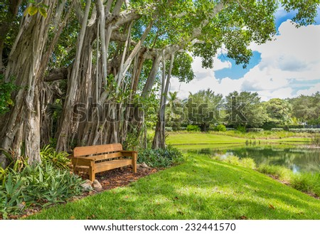 Beautiful Banyan tree in botanical garden - stock photo