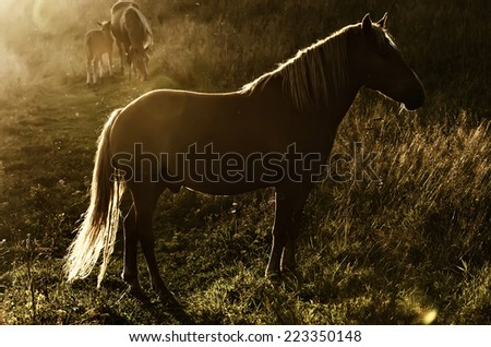 Beautiful bay horse grazes in the mountains at sunset, amazing hipster sunny natural background - stock photo