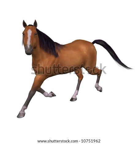 Beautiful Bay Horse Trotting isolated